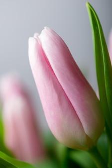 Botões de tulipa rosa com folhas verdes em um buquê