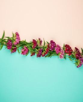 Botões vermelhos florescendo cravos turcos dianthus barbatus