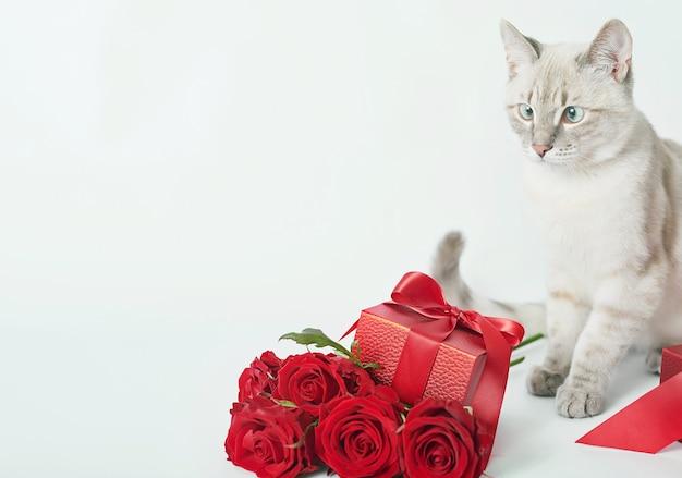 Bouquet de flores rosas perto de gatinho fofo