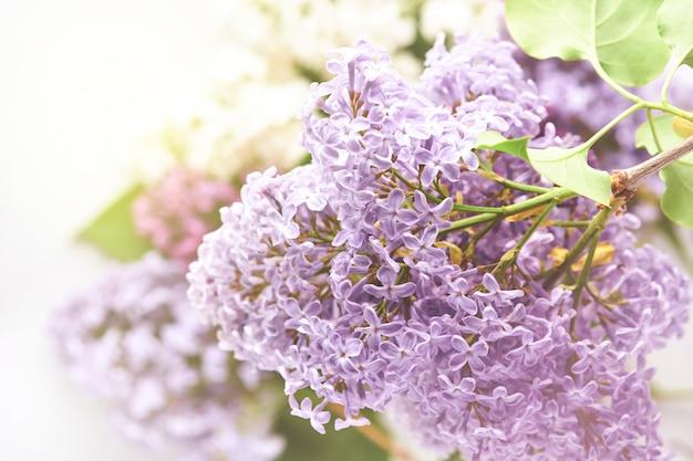 Bouquet de lindo lilás branco e roxo em fundo branco. vista do topo. cartão festivo. fundo floral primavera ou verão. flores desabrochando. imagem tonificada.