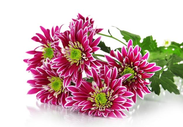 Bouquet de lindos crisântemos isolados no branco