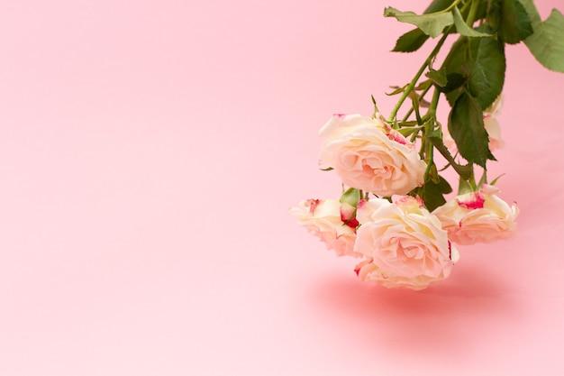 Bouquet de pequenas rosas brancas - rosa em um close-up de fundo pastel, com espaço de cópia.