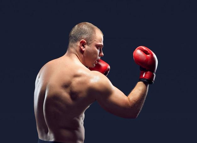 Boxer jovem boxe