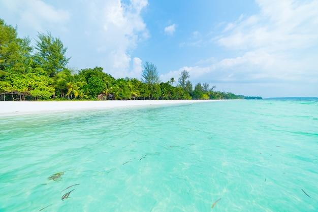 Branca, areia, praia, com, coqueiros, coqueiros, turquesa, transparente, água, tropicais, viagem, destino, deserto, praia, nenhum povo, -, kei, ilhas, moluccas, indonésia