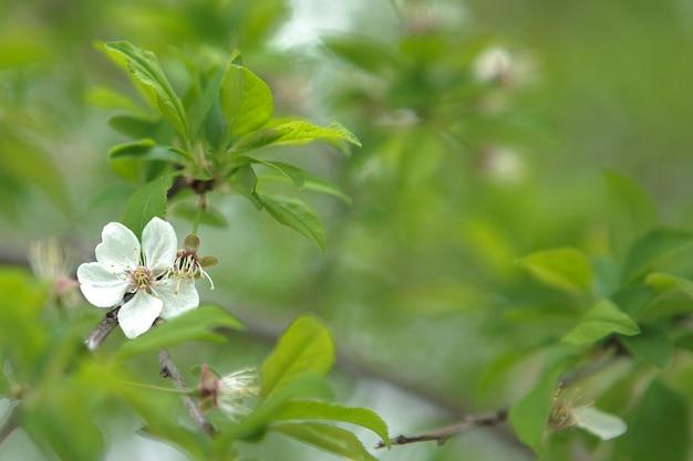 Branca flor desabrochando no fundo desfocado das folhas verdes
