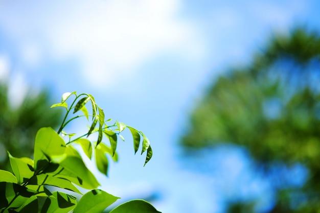 Branchs verdes da licença com o céu natural e azul da luz solar bonita na floresta.