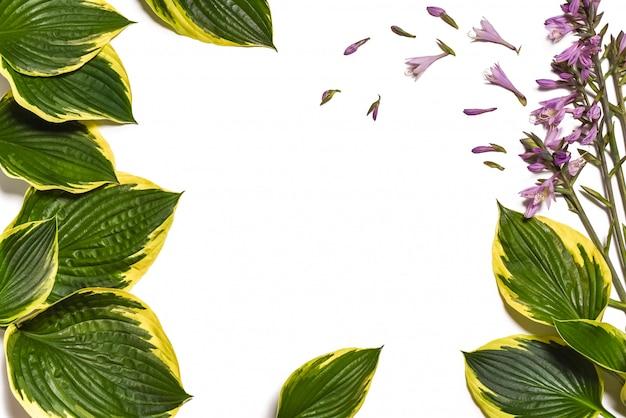 Branco com folhas verdes, composição plana de vista superior.