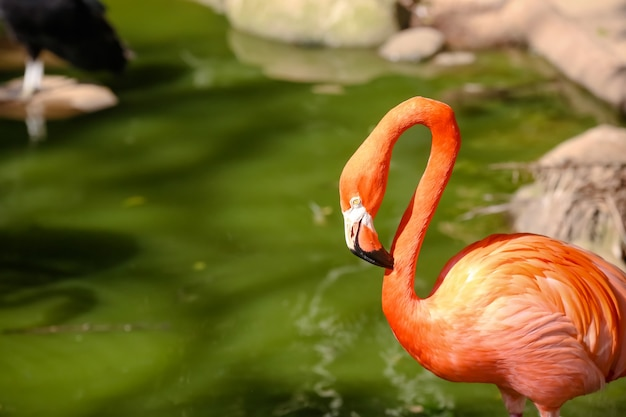 Brasil - sãƒâƒo josãƒâ dos campos sp - 2021-03-31 - avistamientos de animales y seã ± ales que marcan las especies de animales en el zoolã³gico de sãƒâ £ o paulo. ã'â © luis lima jr / latinphoto.org