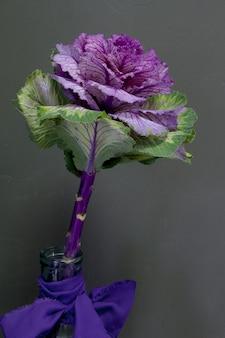 Brassica oleracea capitata ou repolho decorativo em um vaso de vidro com uma fita roxa em um fundo cinza, cartão ou conceito