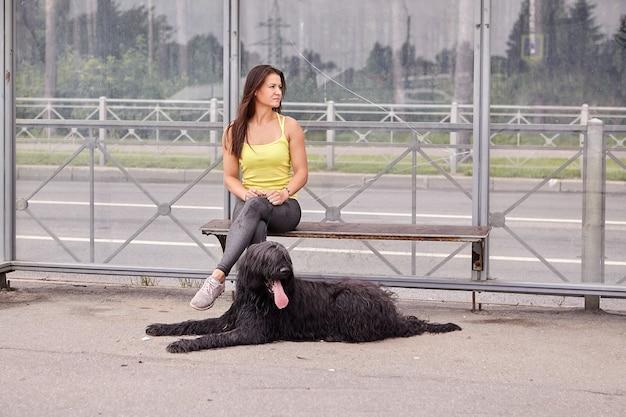 Briard desgrenhado preto está deitado perto de uma jovem na parada de transporte público e esperando o ônibus.