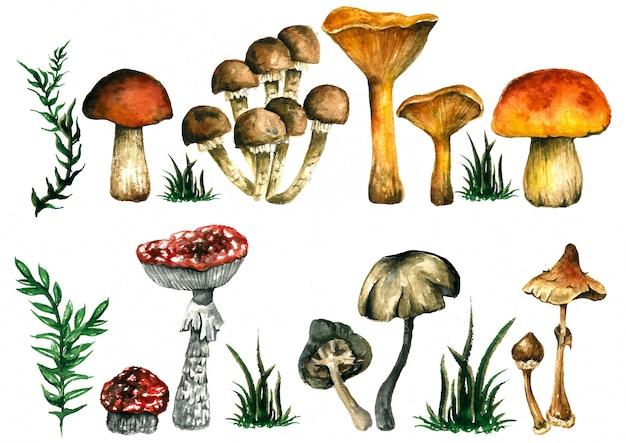 Brilhante coleção com outono, cogumelos.