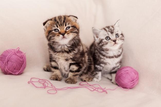 Brincalhão e curioso. dois gatinhos curiosos scottish fold sentados próximos um do outro e perto da lã emaranhada