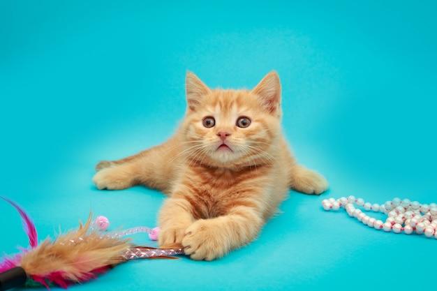 Brincalhão gatinho vermelho sobre um fundo azul.
