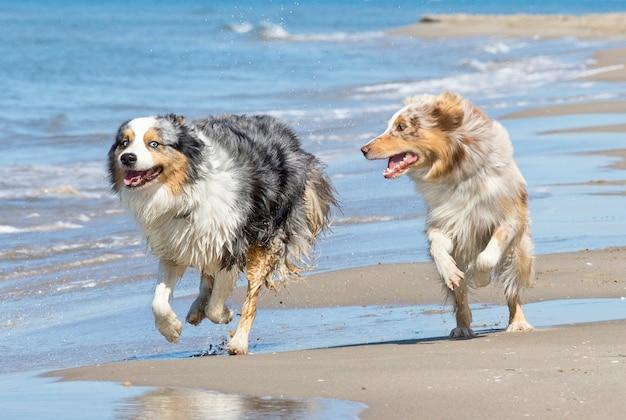 Brincando de cachorros na praia