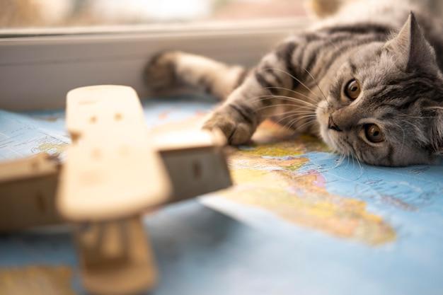 Brinquedo borrado e gato descansando em um mapa