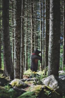 Brinquedo urso preto na floresta