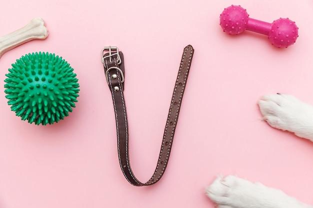 Brinquedos de patas de cães e acessórios para brincar e treinar