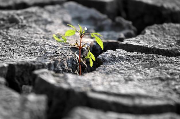Brotam plantas crescendo em terra rachada muito seca