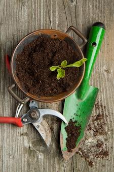 Brotar no solo com ferramentas de jardim