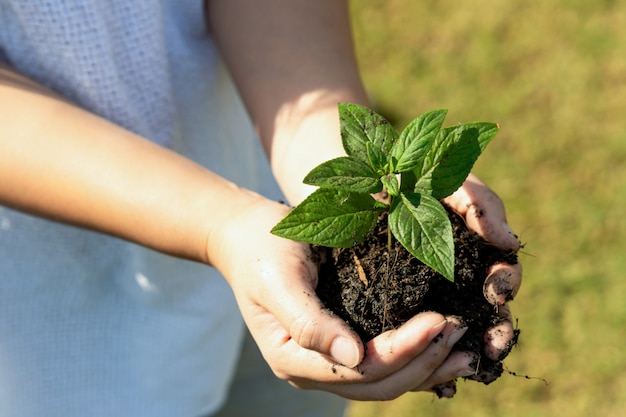 Broto de árvore de planta jovem na mão da mulher.