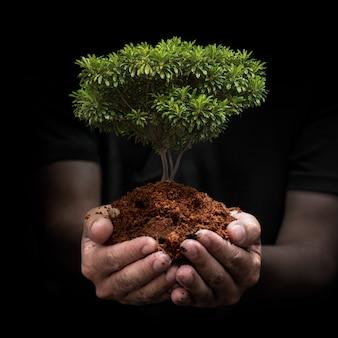 Broto de árvore na mão