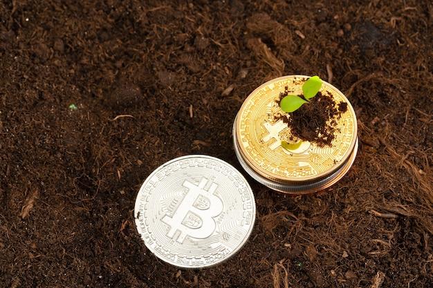 Broto de planta e crescimento de bitcoin da criptomoeda bitcoin
