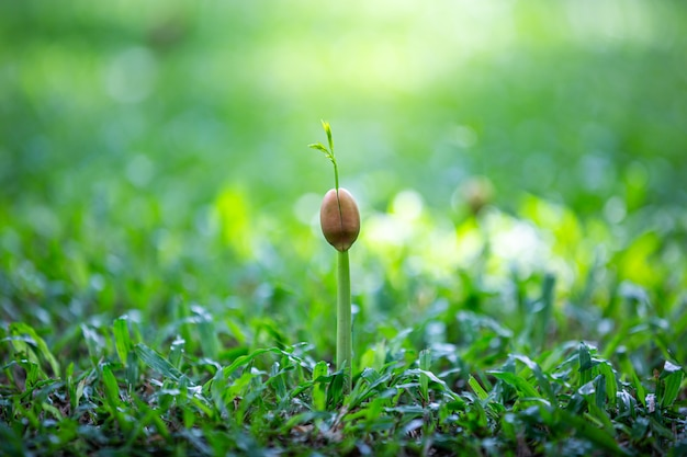 Broto verde crescendo a partir de sementes no chão