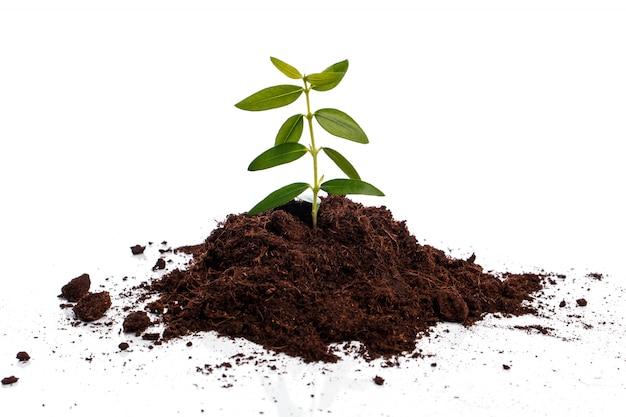 Broto verde pequeno no solo