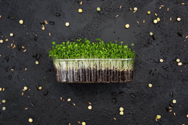 Brotos de alfafa vegetal, micro, microgeen
