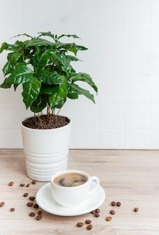 Brotos de árvore de café em uma panela, xícara de café e grãos de café torrados na mesa