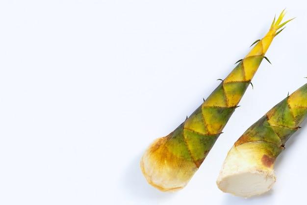 Brotos de bambu em fundo branco.
