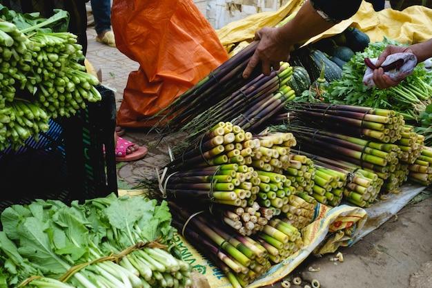 Brotos de bambu verdes roxos para venda
