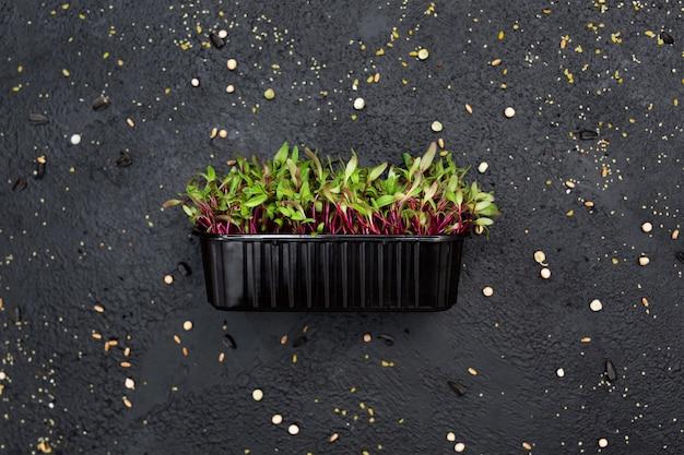 Brotos de beterraba vegetal, microgeen