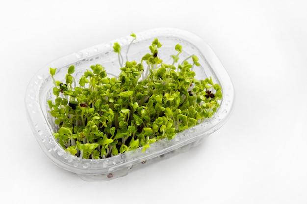 Brotos de brócolis cultivados em casa - fonte da enzima mirosinase e sulforafano como tratamento antineoplásico.