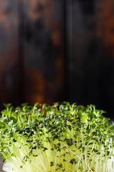 Brotos de ervilha microgreen na velha mesa de madeira. estilo vintage. conceito de alimentação vegana e saudável. brotos em crescimento. foco seletivo