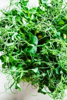 Brotos de ervilhas verdes em uma panela no fundo cinza