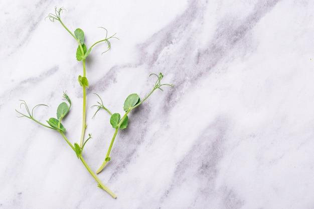 Brotos de ervilhas verdes frescas micro