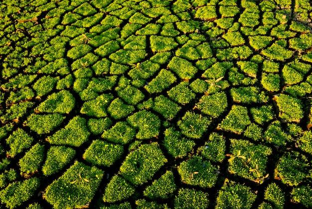 Brotos de grama verde em solo erodido pelas mudanças climáticas