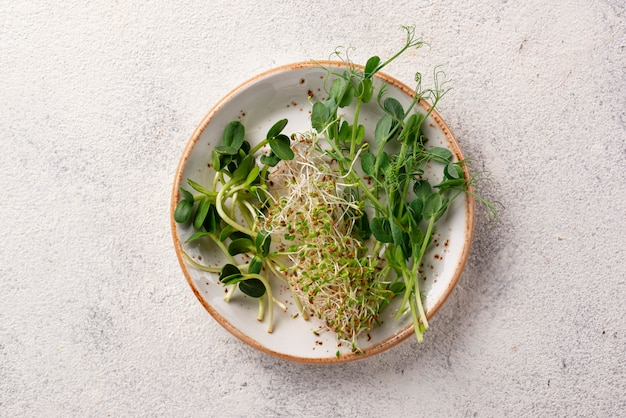 Brotos de micro greens frescos