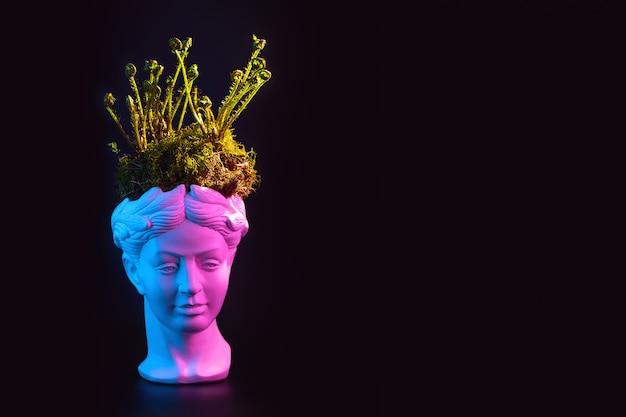 Brotos de samambaia jovem e musgo na cabeça da estátua antiga.