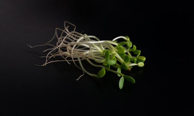 Brotos de trevo vermelho, luzerna e brotos de rabanete isolados vista superior. sementes de vegetais germinadas para alimentos dietéticos crus, conceito de alimentação saudável micro verde