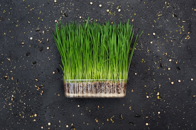 Brotos de trigo vegetal, micro, microgeen