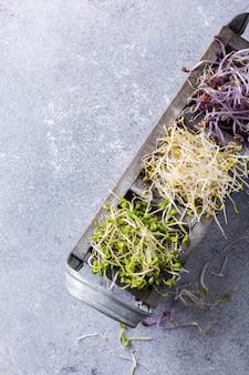 Brotos de vegetais variados