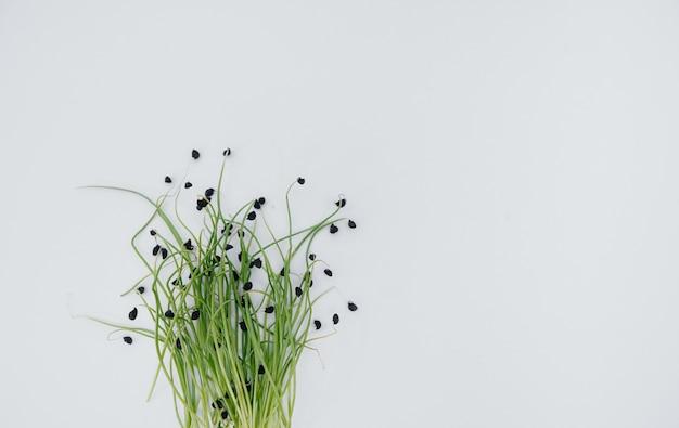 Brotos micro-verdes em uma mesa branca com espaço livre.