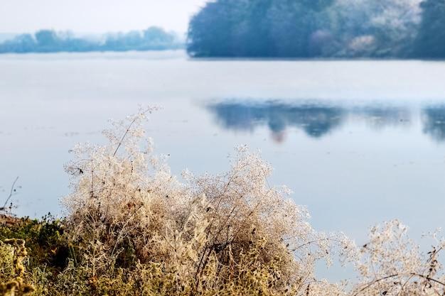 Brotos secos de plantas cobertos de geada perto do rio pela manhã
