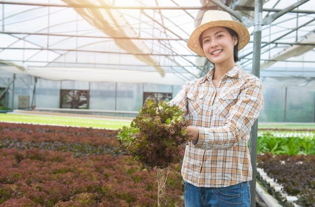 Brunch de carvalho vermelho fresco no crescimento de mão de mulher de fazendeiro asiático na fazenda hidropônica com efeito de estufa