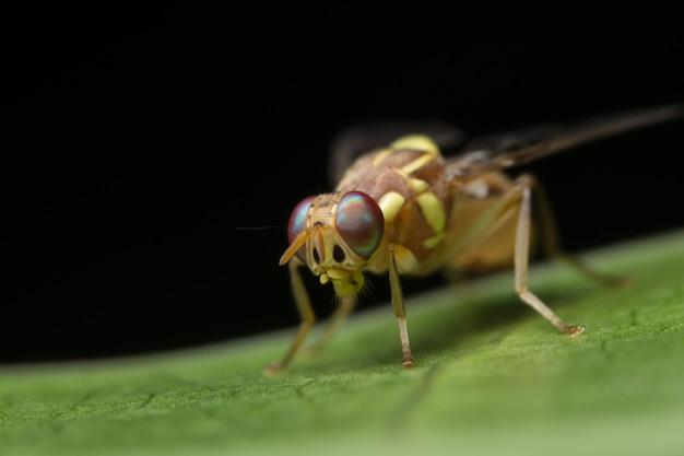Bug inseto fundo inverterbrate drosophila