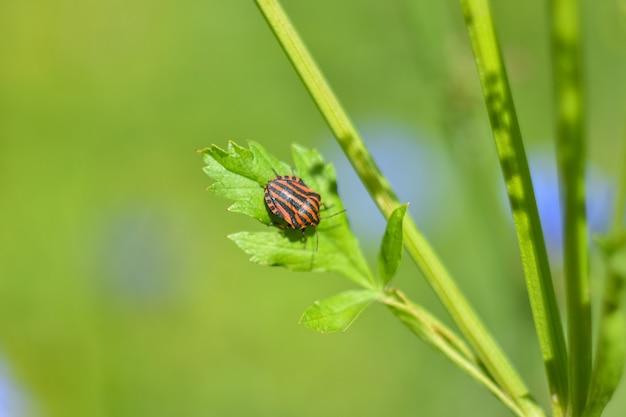 Bug macro listrado em uma planta verde