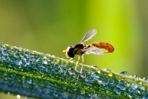 Bug na folha com gota