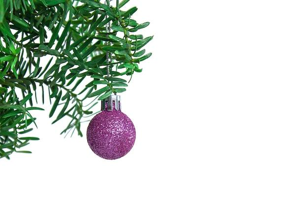 Bugiganga roxa de natal pendurada em um galho de conífera em um fundo branco